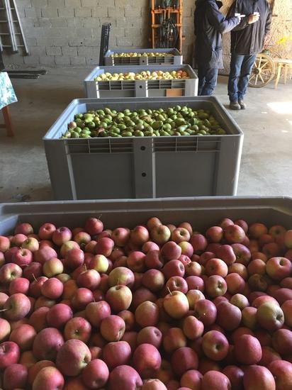 modules de pommes bio mars 2019 -